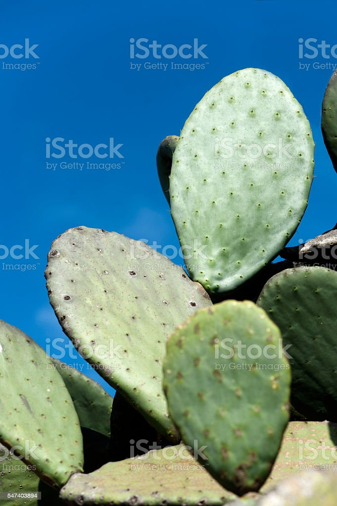 Isolated Cactus stock photo
