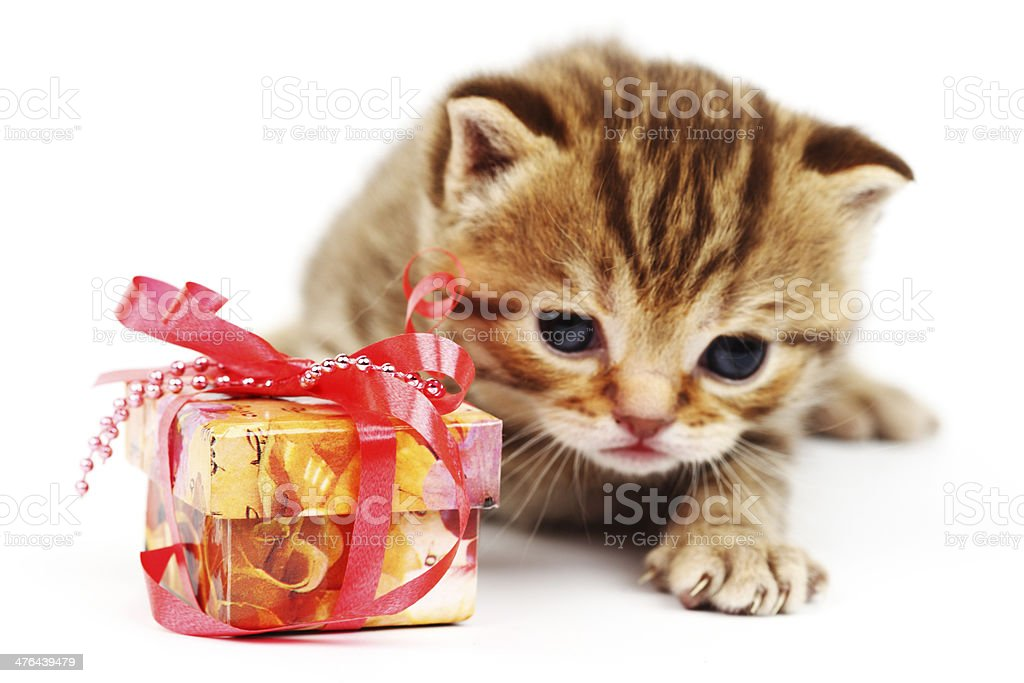 isolated cat and gift royalty-free stock photo