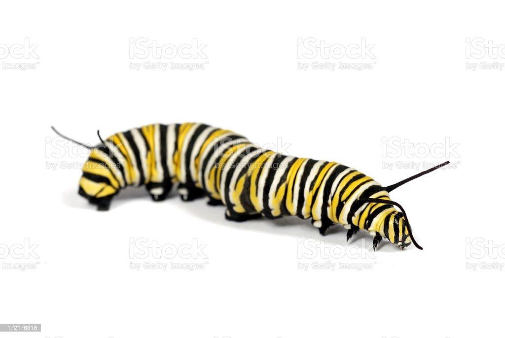 Isolated Caterpillar royalty-free stock photo