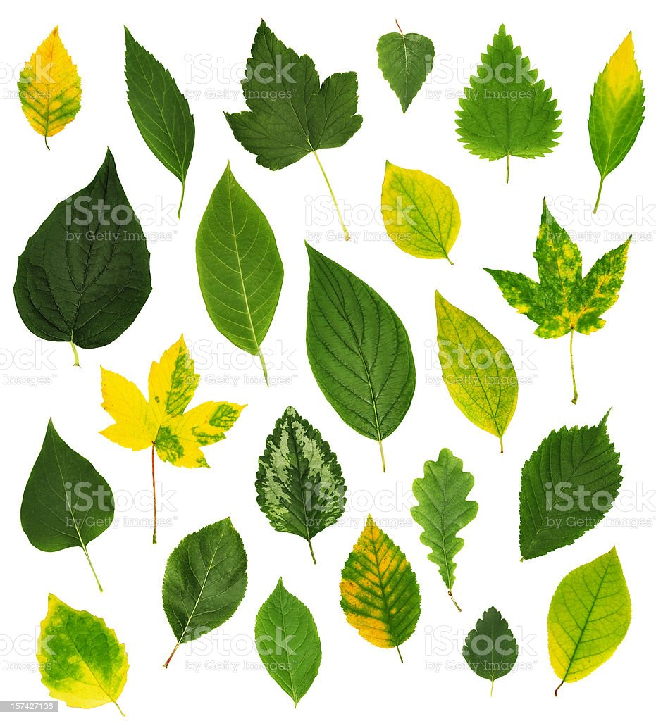 Isolated collection of leaves. royalty-free stock photo