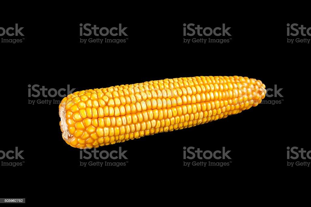 Isolated Corn Cob stock photo