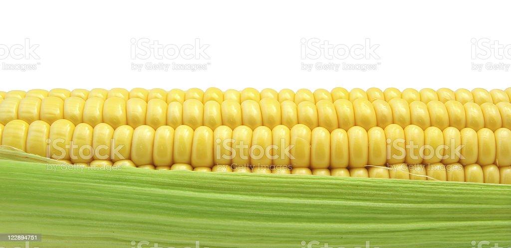 Isolated corn. stock photo