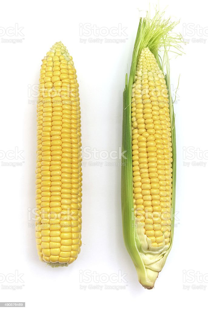 Isolated corn. stock photo
