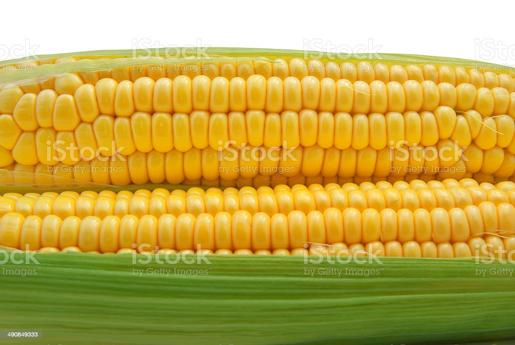 Isolated corn stock photo