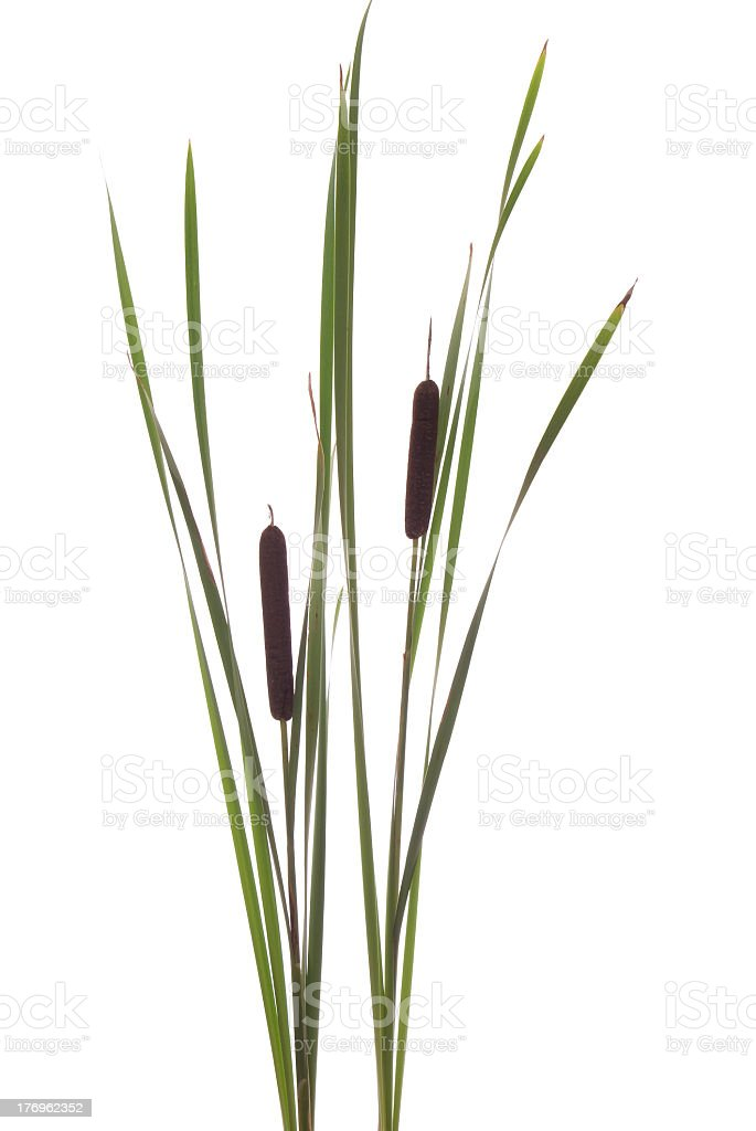 Isolated couple of vegetation in blank area stock photo