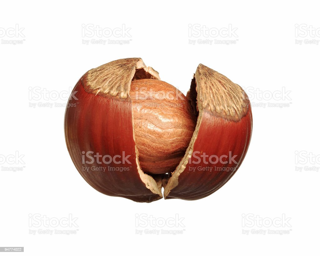 Isolated cracked hazelnut on white background royalty-free stock photo