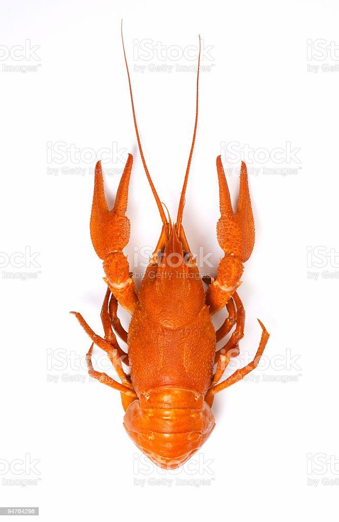 isolated crayfish #2 royalty-free stock photo