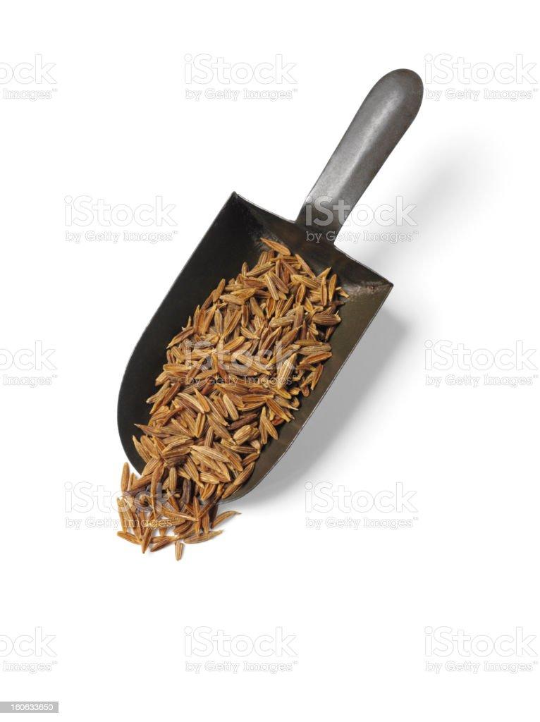 Isolated Cumin Seeds royalty-free stock photo