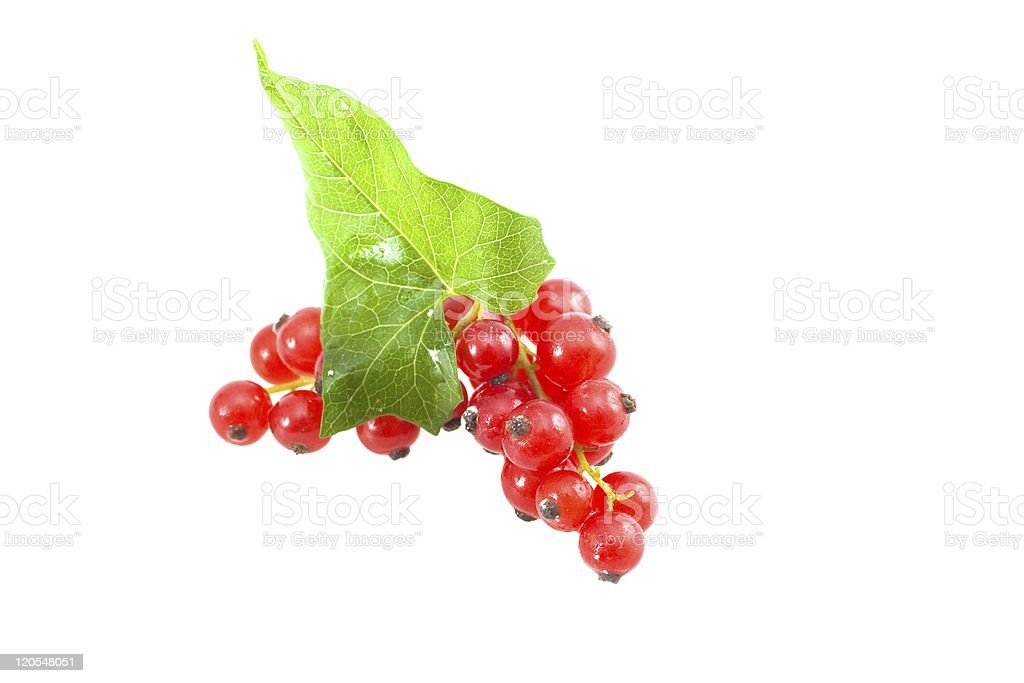Isolated currants royalty-free stock photo
