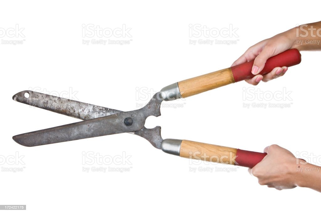 isolated cutting shears stock photo