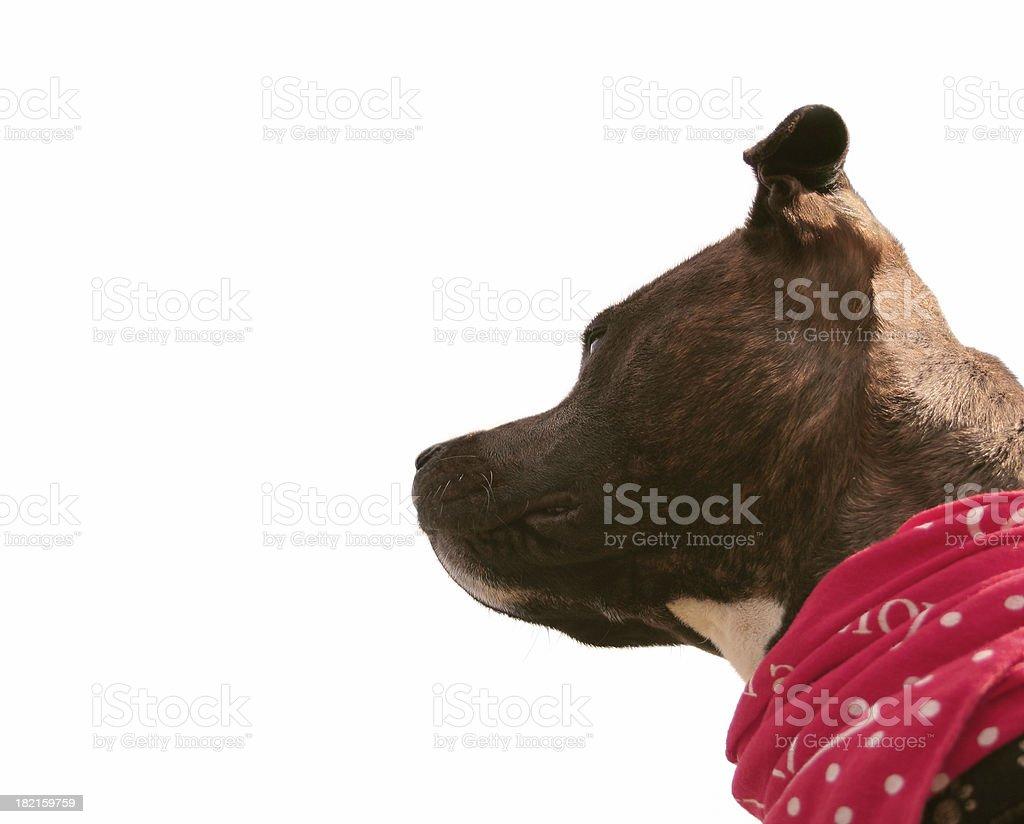 isolated dog stock photo