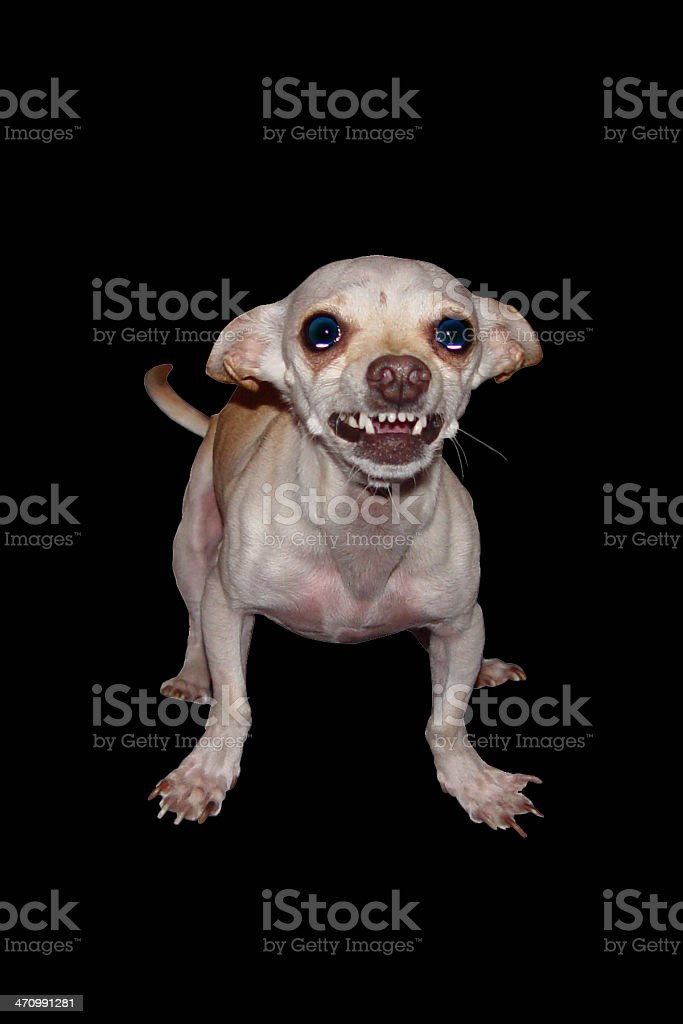 Isolated Dog royalty-free stock photo