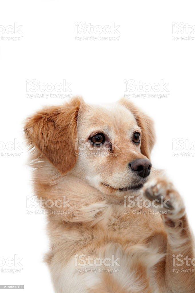 Isolated dog waving goodbye stock photo
