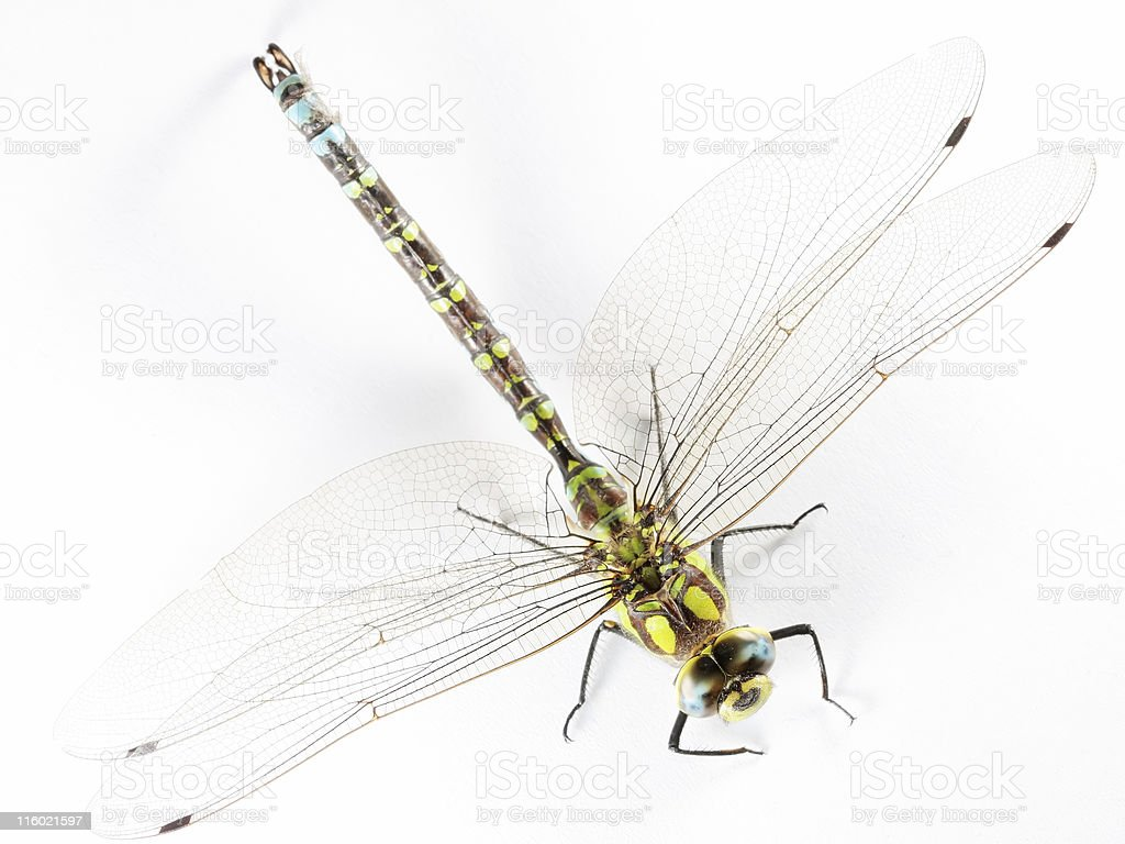Isolated dragonfly 02 royalty-free stock photo