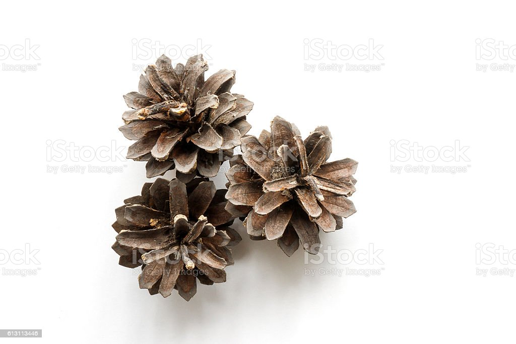 Isolated dried pine cones stock photo