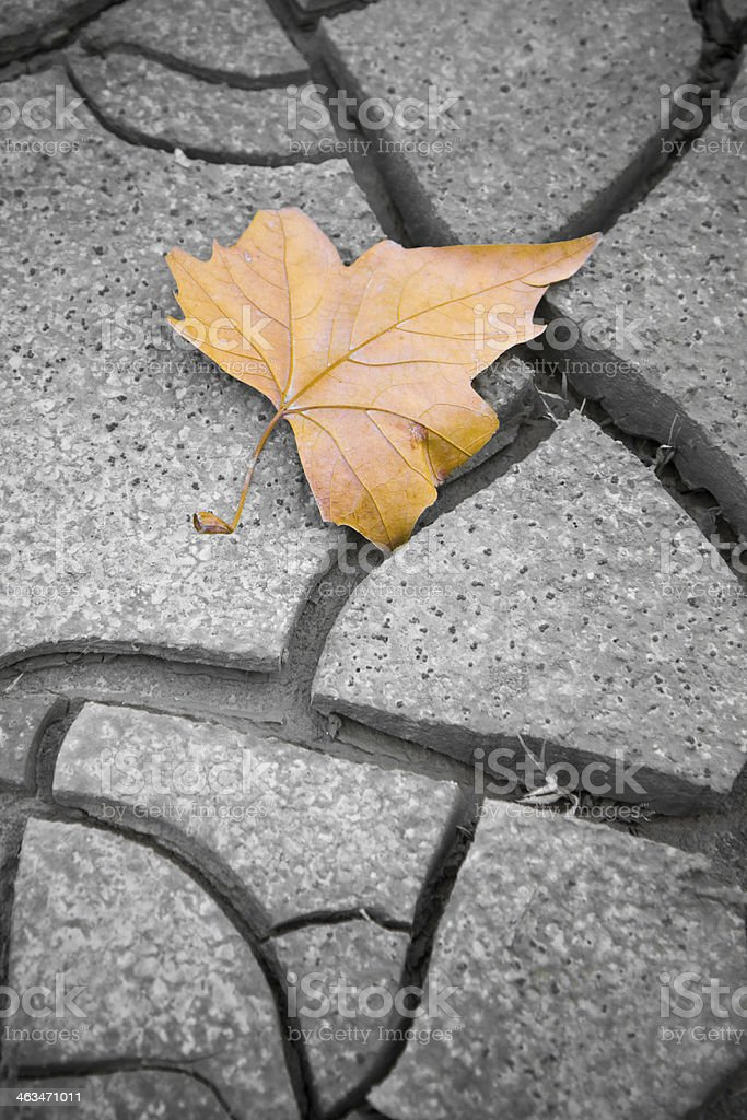 Isolated dry leaf on the ground royalty-free stock photo