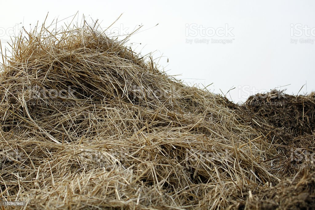 isolated Dung heap stock photo