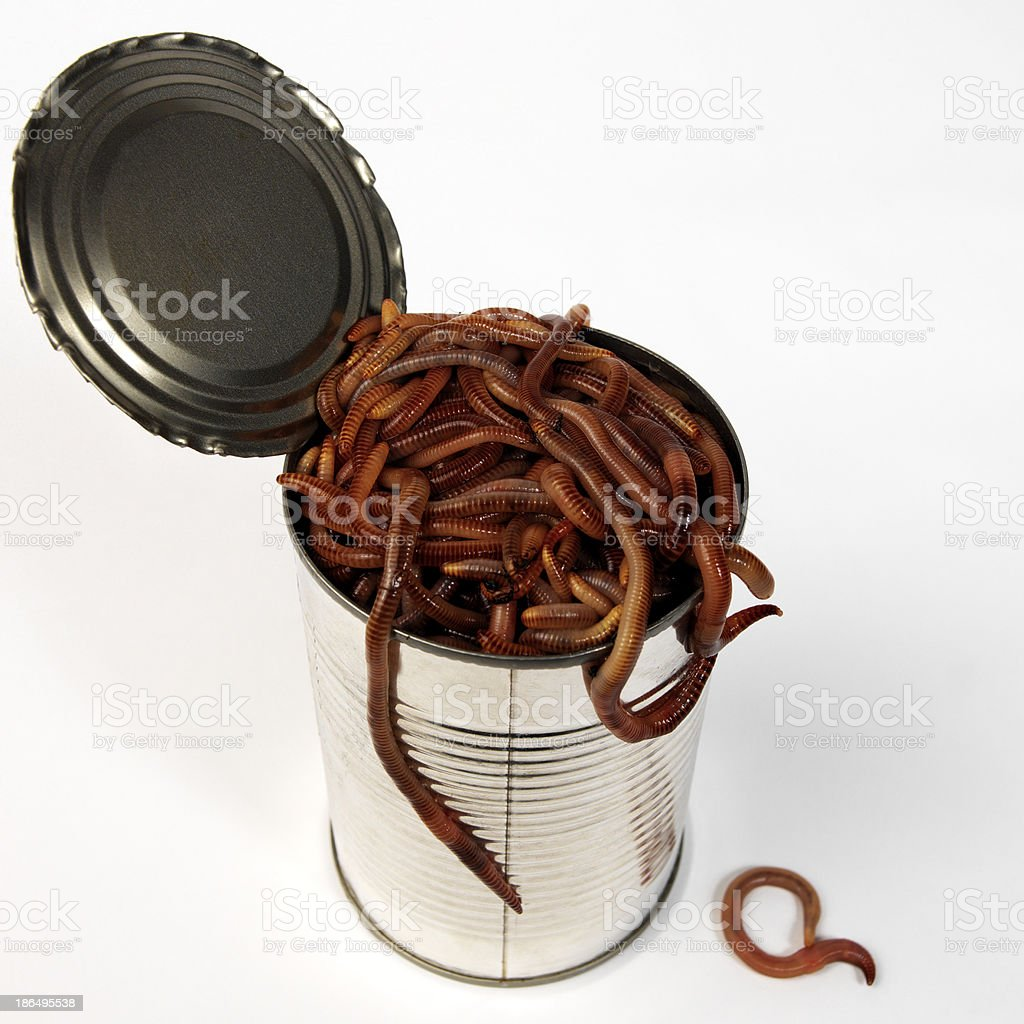 Isolated earth worms stock photo