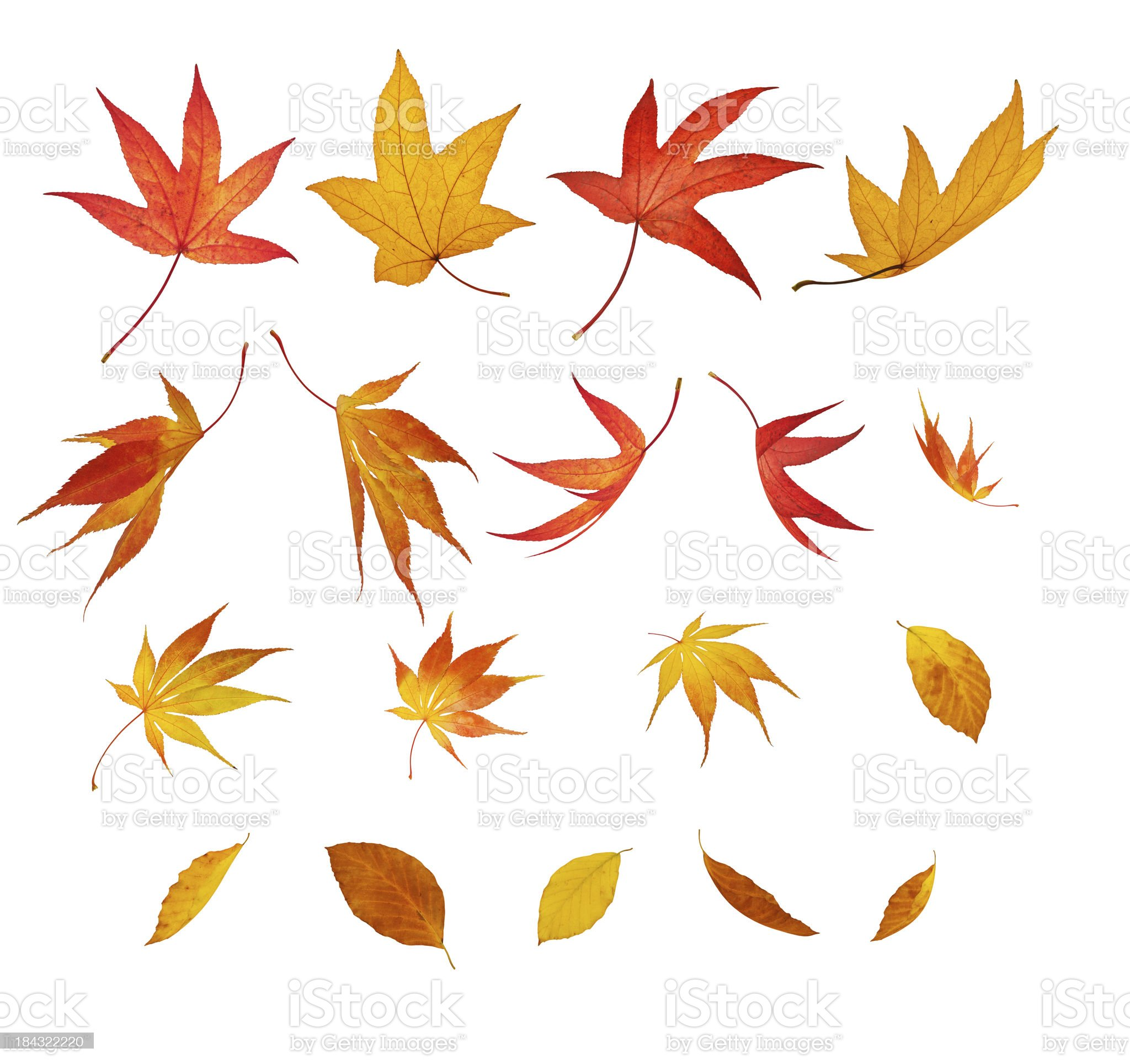 Isolated Falling Autumn Leaves royalty-free stock photo