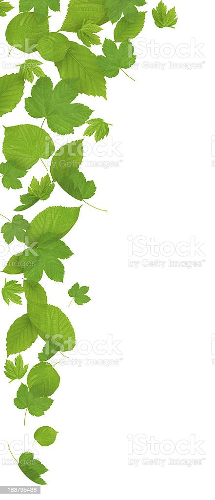 Isolated Falling Green Leaves royalty-free stock photo