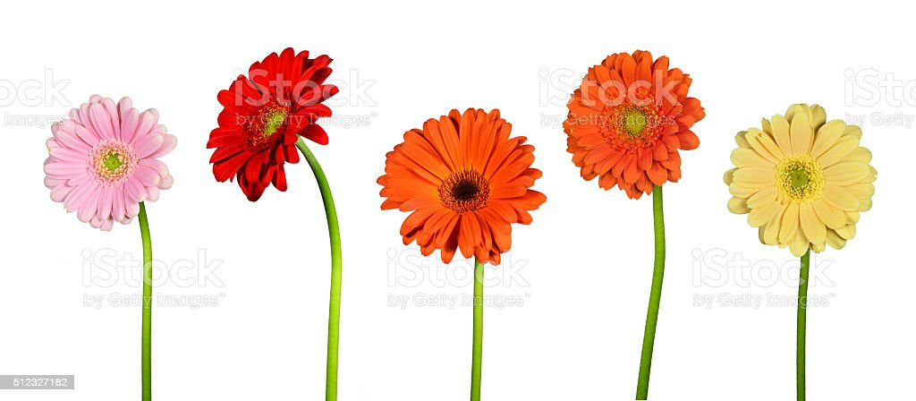 Isolated flowers stock photo