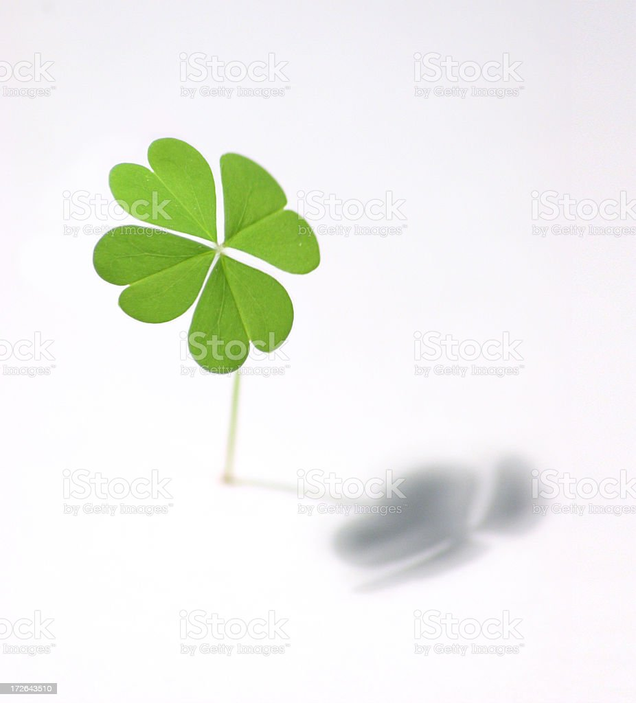 Isolated four leaf clover casting shadow stock photo