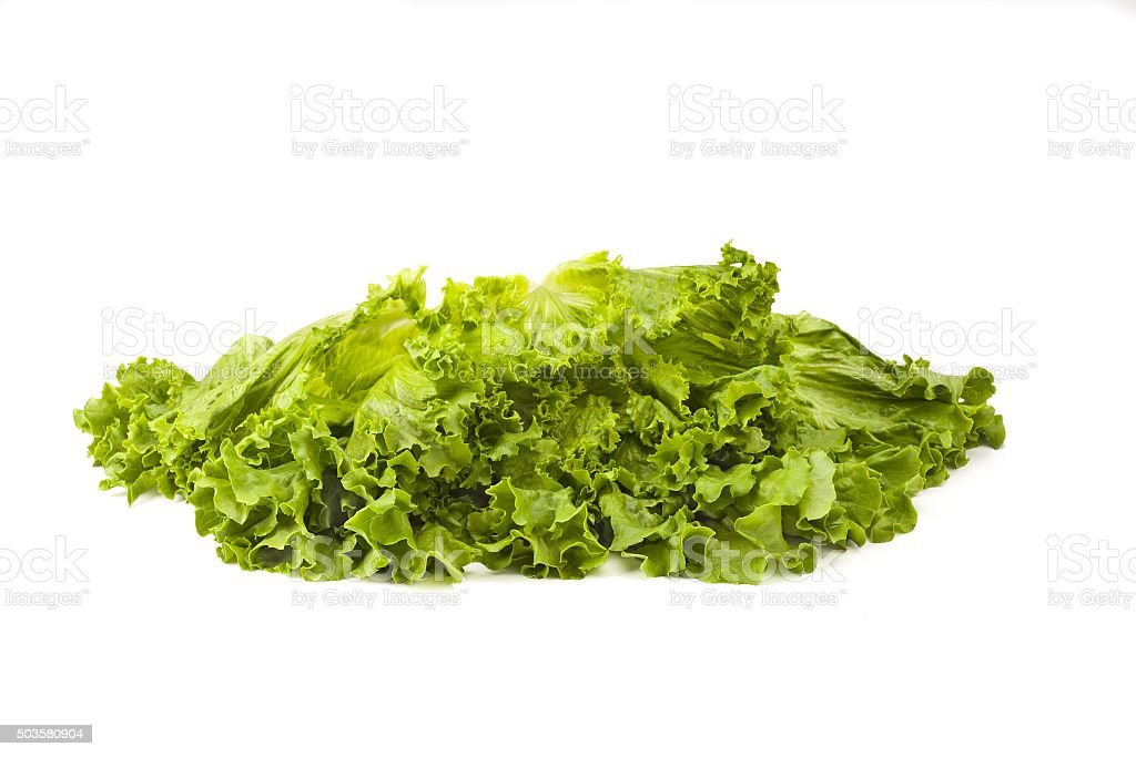 isolated fresh lettuce stock photo