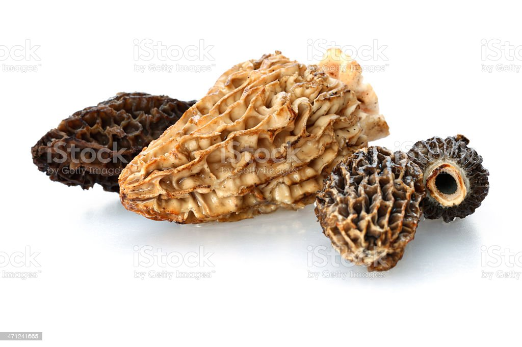 Isolated Fresh Morel Mushrooms stock photo