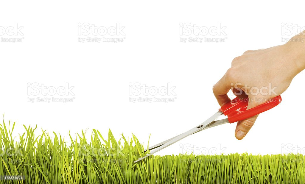 Isolated grass and hand with scissors stock photo