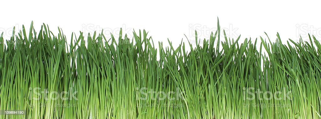 isolated grass [cliping path] royalty-free stock photo
