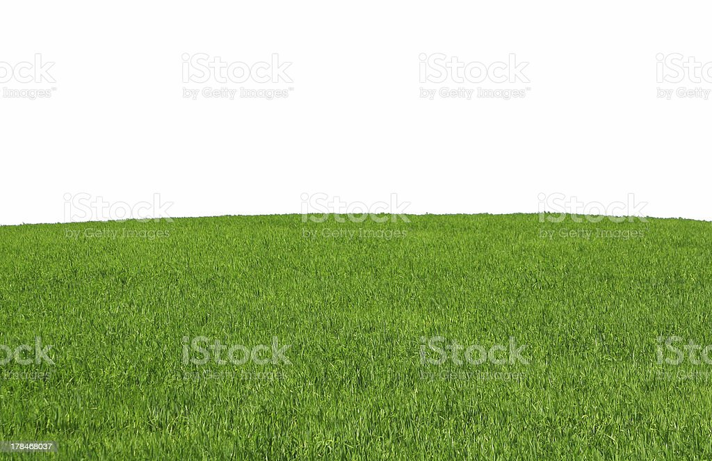 isolated grass field royalty-free stock photo