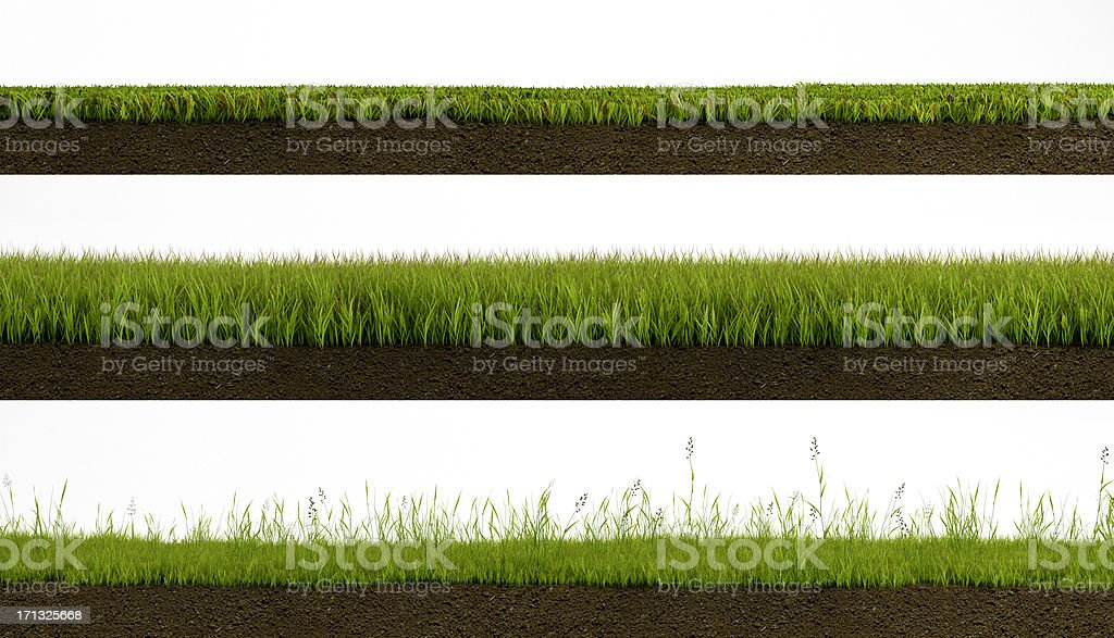 Isolated grass royalty-free stock photo