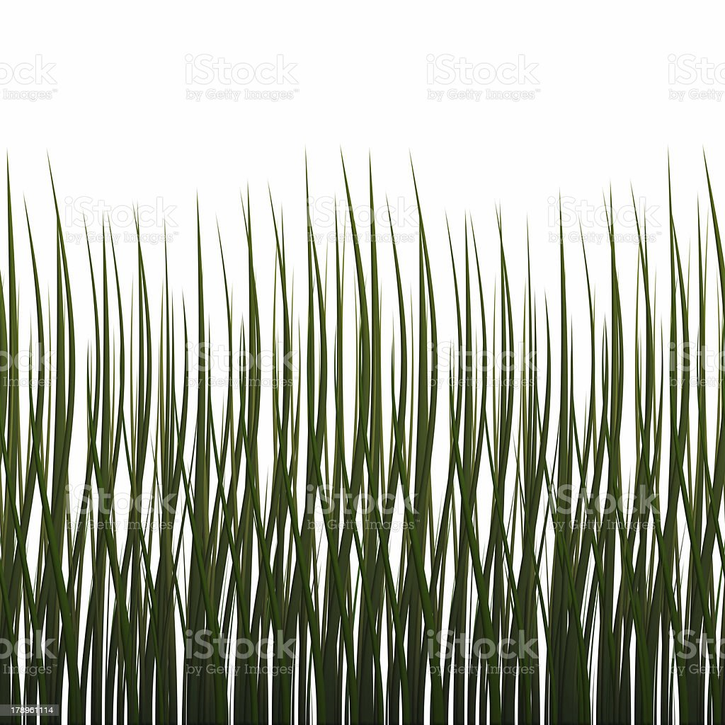 Isolated grass (Seamless texture) royalty-free stock photo