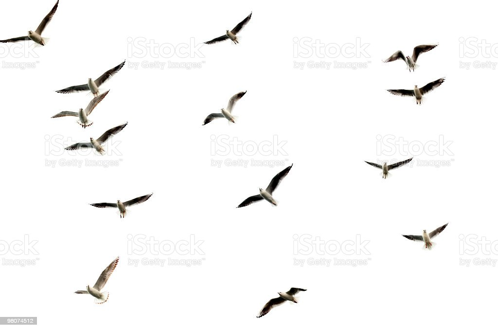 isolated group of flying birds stock photo