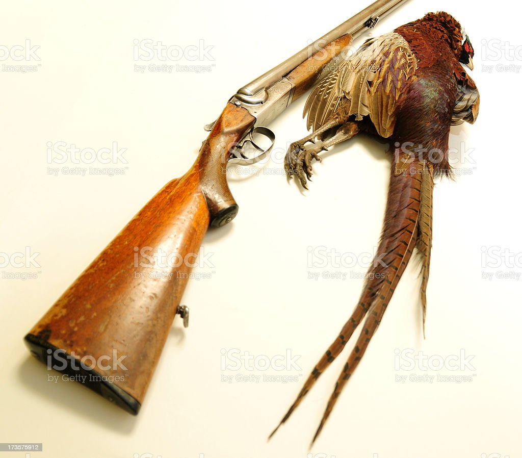 Isolated gun and bird royalty-free stock photo