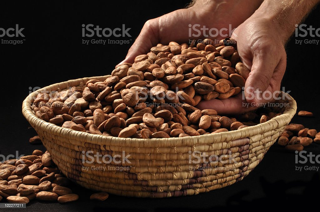 Isolated hands holding raw cacao bean in a woven basket stock photo