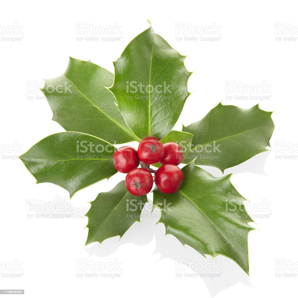 Isolated holly on a white background stock photo