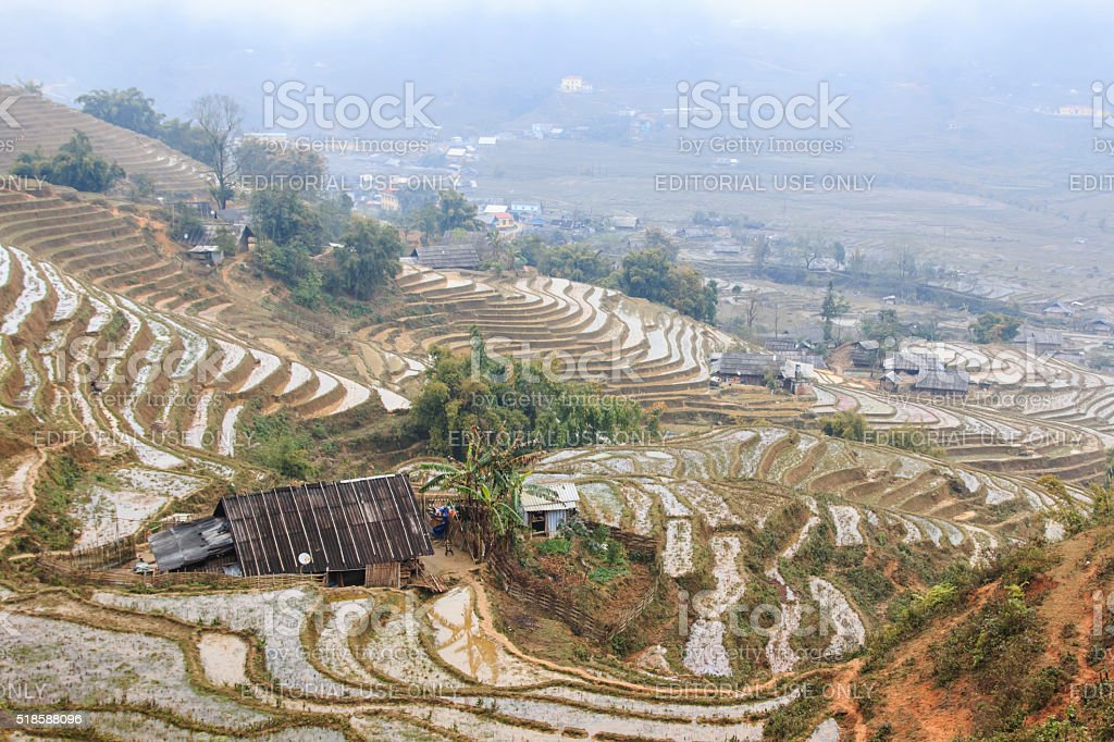 Isolated house among the rice terraces of Sapa stock photo