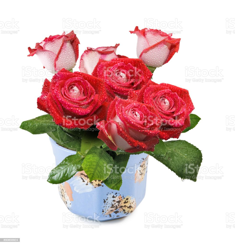 Isolated image of flowers in a pot close-up stock photo
