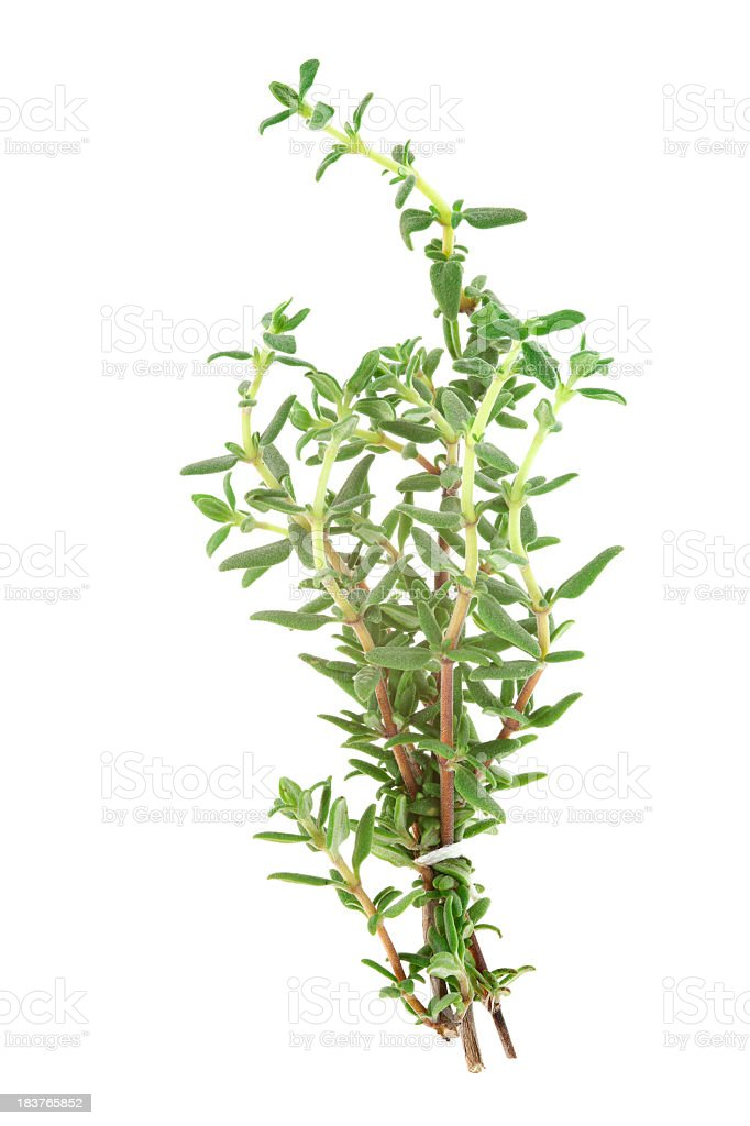 Isolated image of thyme on a white background stock photo