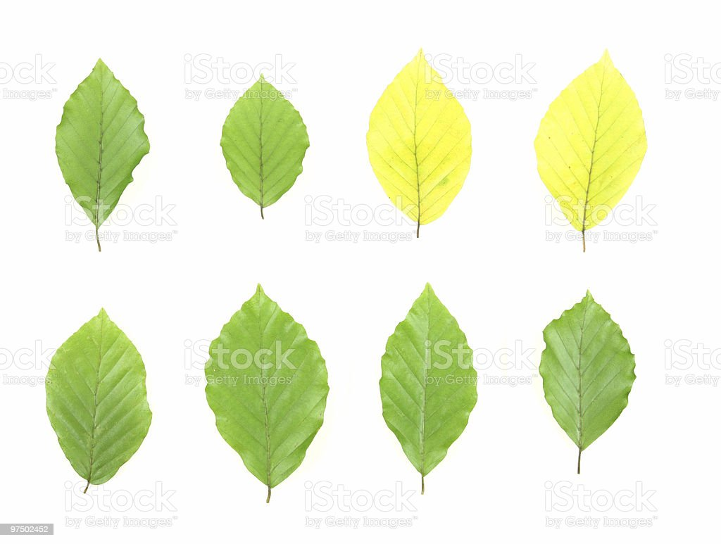 Isolated leaves royalty-free stock photo
