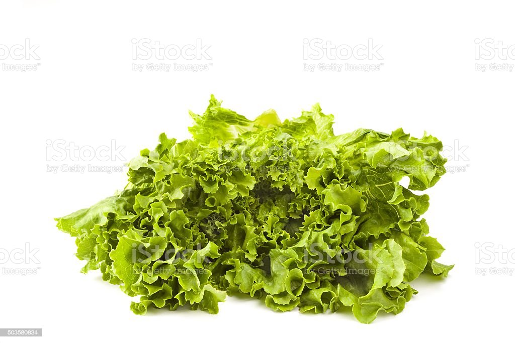 Isolated Lettuce on White stock photo