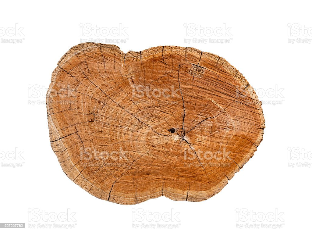 Isolated log stump and cross section texture stock photo