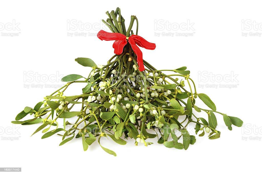 Isolated Mistletoe Twig royalty-free stock photo