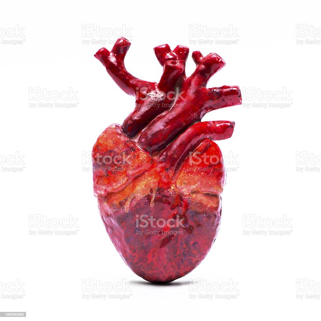 Isolated model of human heart royalty-free stock photo