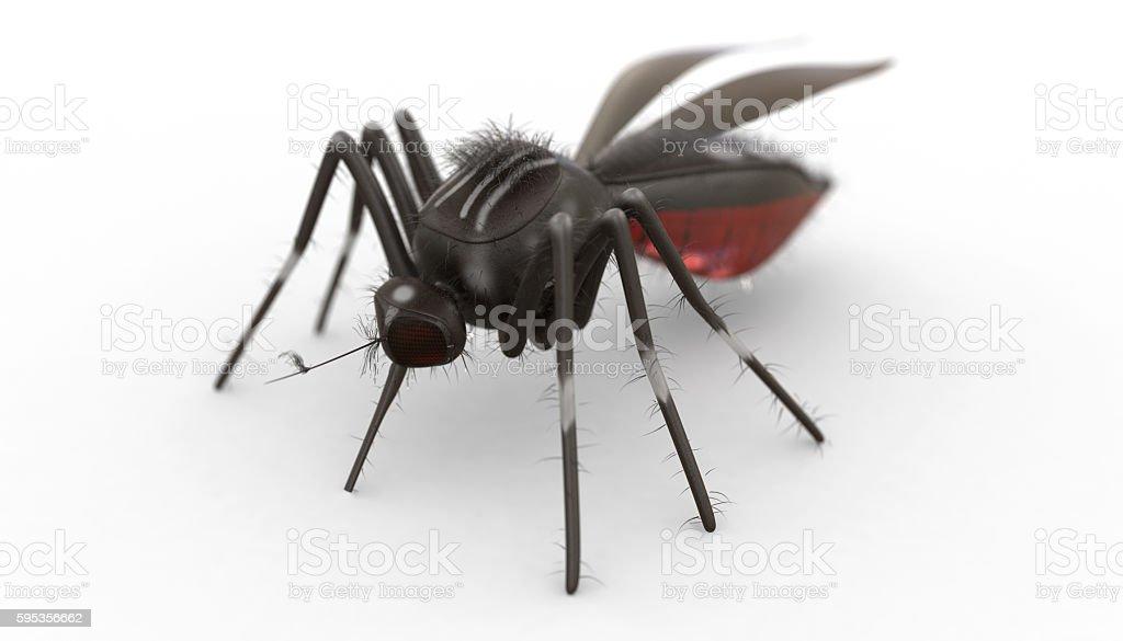 Isolated Mosquito stock photo