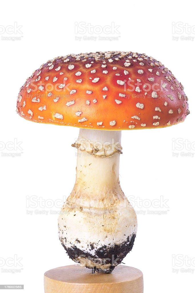 Isolated Mushroom stock photo