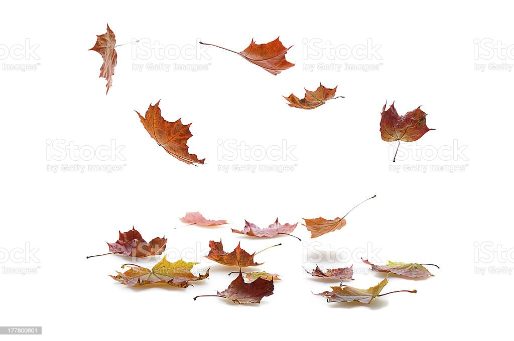Isolated picture of falling autumn leaves stock photo