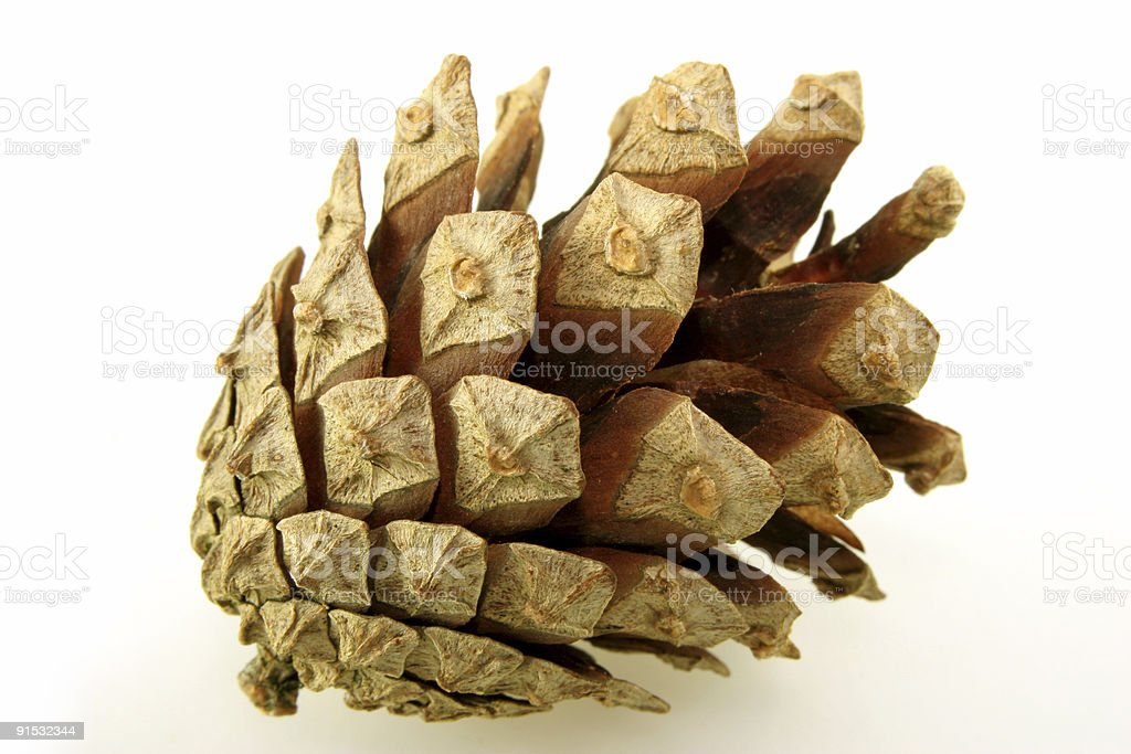 Isolated Pine Cone stock photo