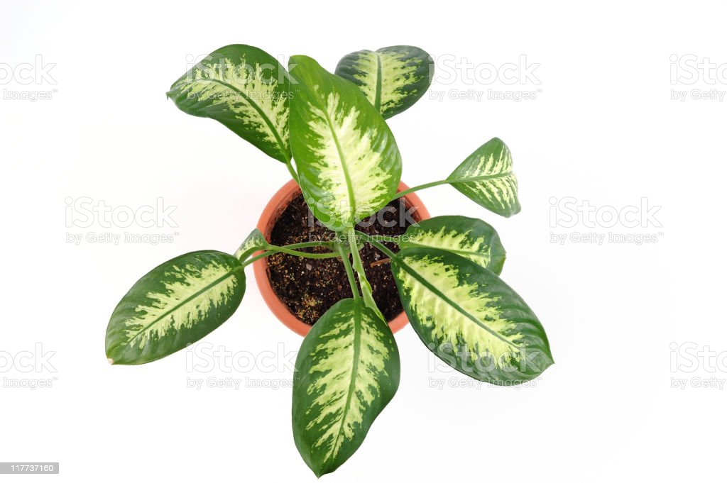 Isolated potted plant royalty-free stock photo